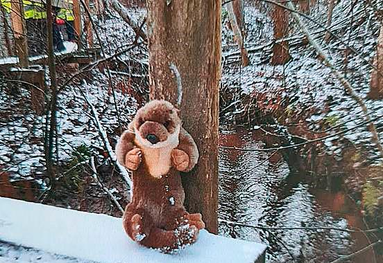 Päiväkodin maskotti Sisu-saukko metsäretkellä.